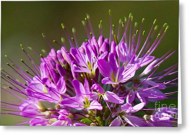 Flower Photo Greeting Cards - Green Tips Greeting Card by Dana Kern