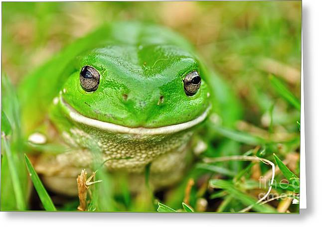 Green Tree Frog Greeting Card by Kaye Menner