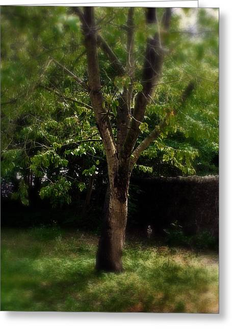 Park Scene Mixed Media Greeting Cards - Green Tree In Park Greeting Card by Michael Braham