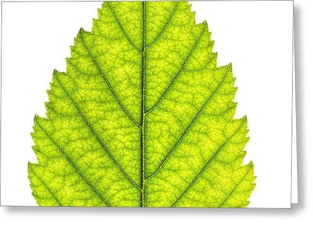 Green tree leaf Greeting Card by Elena Elisseeva