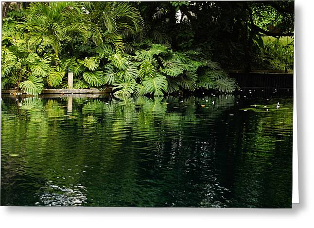 Philodendron Greeting Cards - Green Tropical Paradise - the Gardens of the Museum of Art of Puerto Rico Greeting Card by Georgia Mizuleva