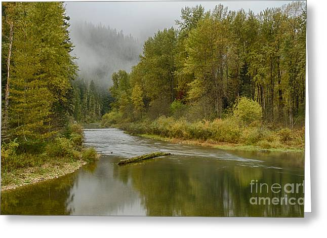 North Fork Greeting Cards - Green Turns to Gold Greeting Card by Idaho Scenic Images Linda Lantzy