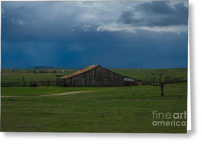 Off The Grid Greeting Cards - Green Valley Rain Greeting Card by Mitch Shindelbower