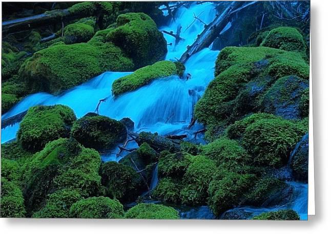 Moss Green Greeting Cards - Green Velvet Moss Greeting Card by Teri Schuster