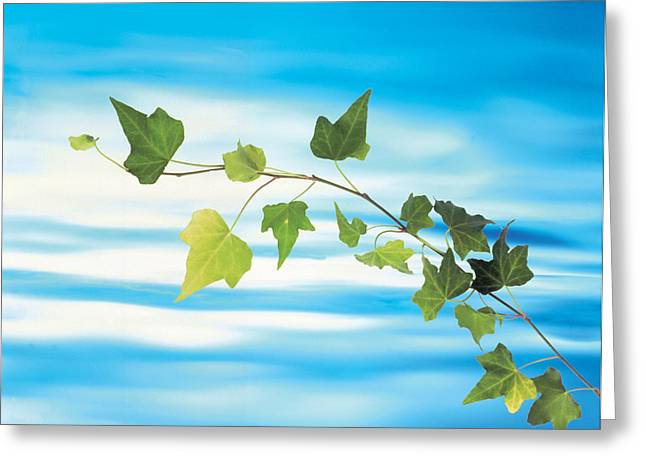 Trailing Greeting Cards - Green Vine Floating In Blue Water Greeting Card by Panoramic Images