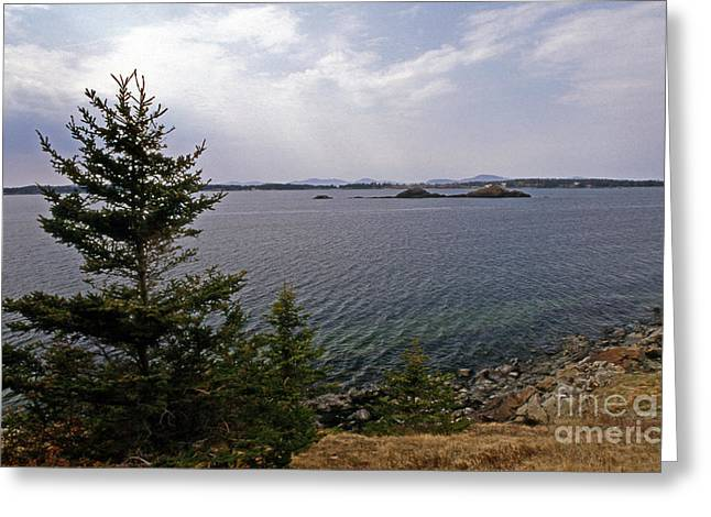 Maine Beach Greeting Cards - Green Water Greeting Card by Skip Willits