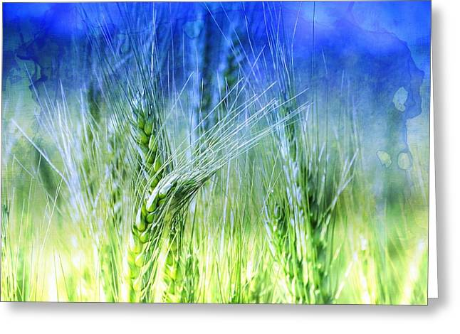 Farmers Field Greeting Cards - Green Wheat Fields India Rajasthan 11 Greeting Card by Sue Jacobi