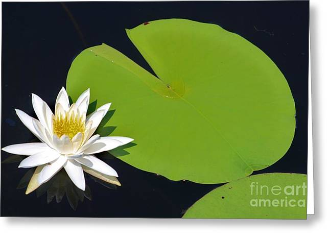 Reflecting Water Greeting Cards - Green White And Yellow Greeting Card by Chuck  Hicks
