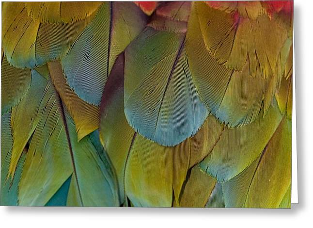 Exploited Greeting Cards - Green-winged Macaw Feathers Greeting Card by RM Vera