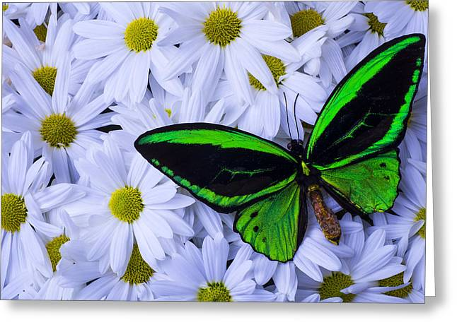 Gorgeous Flowers Greeting Cards - Green Wings In The Mums Greeting Card by Garry Gay
