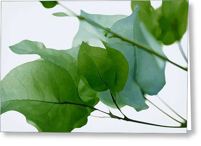 Floral Digital Photographs Greeting Cards - Green With Envy Bougainvillea Greeting Card by Fraida Gutovich