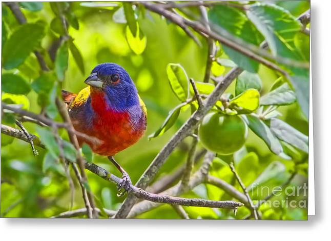 Photographs With Red. Greeting Cards - Green With Envy Greeting Card by Gary Holmes