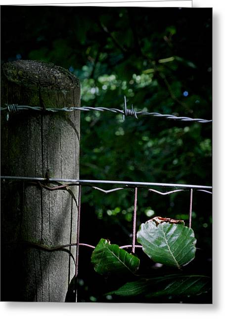 No Trespassing Greeting Cards - Greener There Greeting Card by Odd Jeppesen