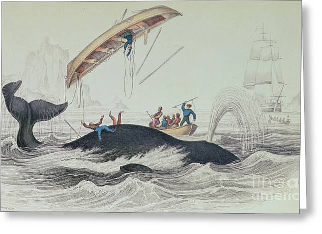 Iceberg Greeting Cards - Greenland Whale book illustration engraved by William Home Lizars  Greeting Card by James Stewart