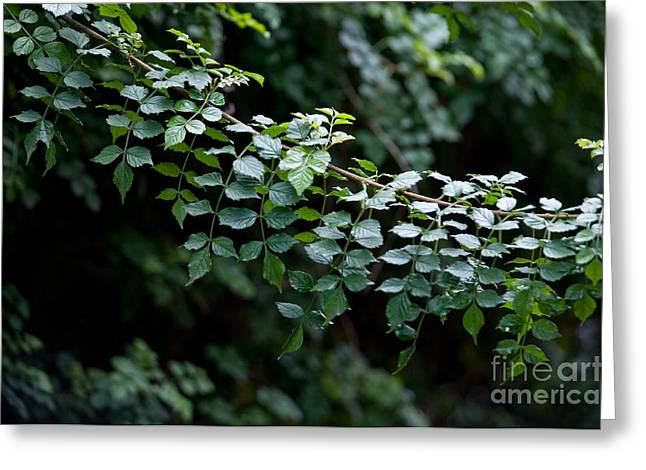 Green Tones Greeting Cards - Greens Greeting Card by Dan Holm