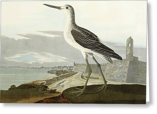 Recently Sold -  - Printed Greeting Cards - Greenshank Greeting Card by John James Audubon