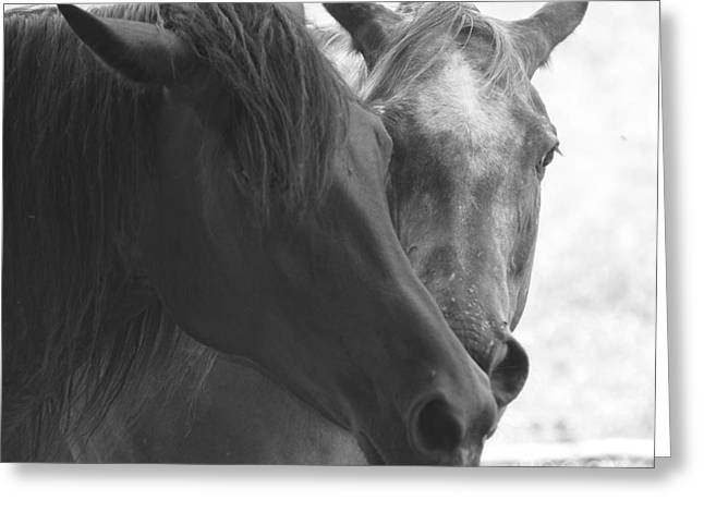 White Horses Photographs Posters Greeting Cards - Greeting of the Herd Greeting Card by Deborah M Rinaldi-Roberts