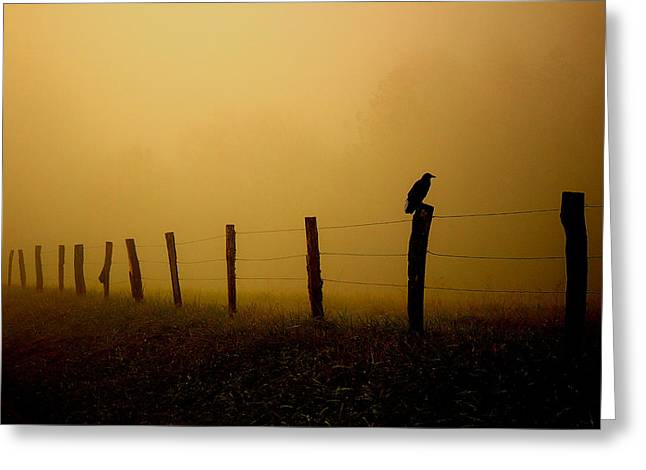 Fence Row Greeting Cards - Greeting The Morning Greeting Card by Michael Eingle