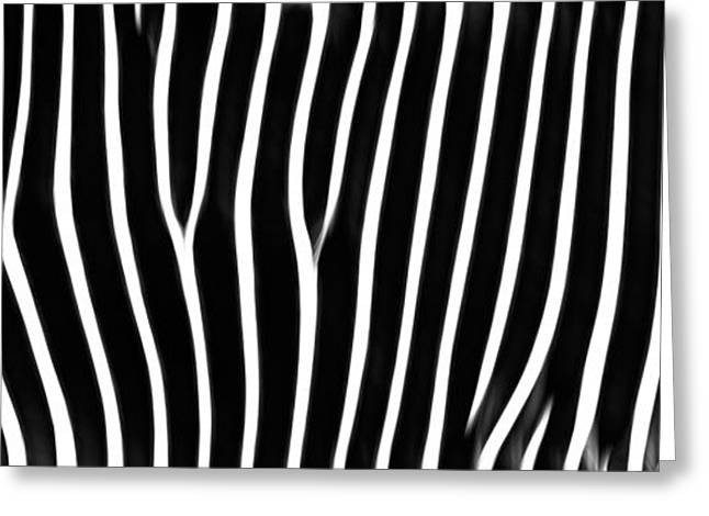 Grunts Greeting Cards - Grevys Zebra Panoramic Image Greeting Card by RM Vera