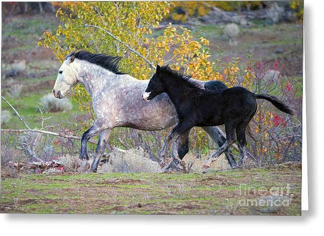 Wild Horses Photographs Greeting Cards - Grey and White Greeting Card by Mike Dawson