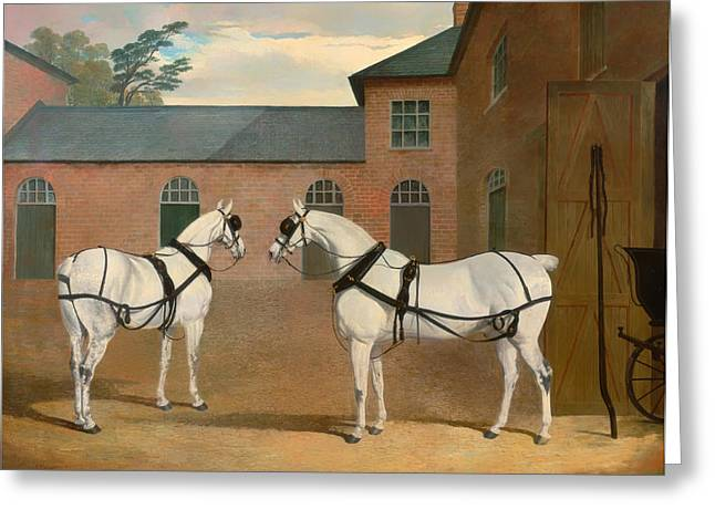 Equine Art Work Greeting Cards - Grey Carriage Horses in the Courtyard Greeting Card by Herring