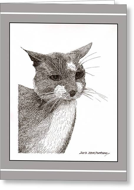 Portraits Of Pets Greeting Cards - Grey cat number 12 Greeting Card by Jack Pumphrey