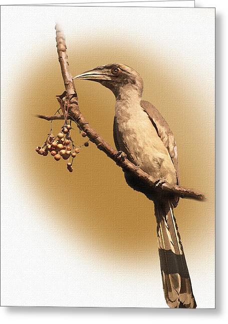 Horns Pyrography Greeting Cards - Grey Hornbill Greeting Card by Milind Waichal