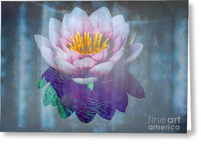 Water Lilly Digital Greeting Cards - Grey Lilly Greeting Card by Robert Ball