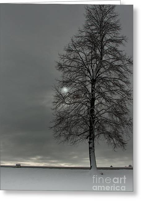 Winter Storm Greeting Cards - Grey Morning Greeting Card by Steven Reed