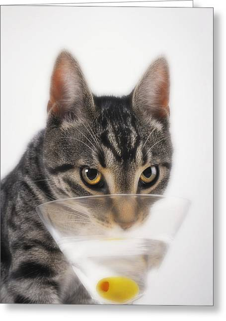 Olive Green Greeting Cards - Grey Tabby Cat Drinking Greeting Card by Thomas Kitchin & Victoria Hurst