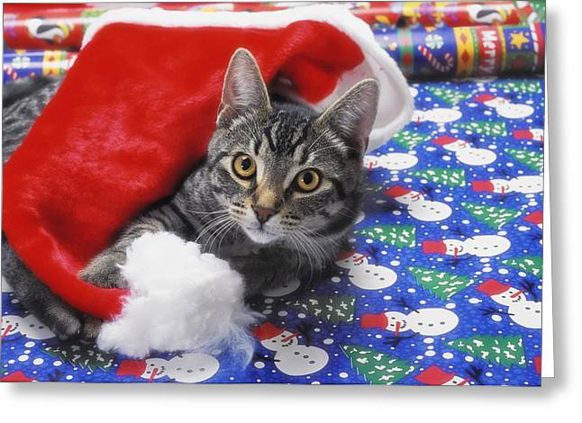 Grey Tabby Cat With Santa Claus Hat Greeting Card by Thomas Kitchin & Victoria Hurst