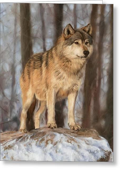 David Greeting Cards - Grey Wolf Greeting Card by David Stribbling