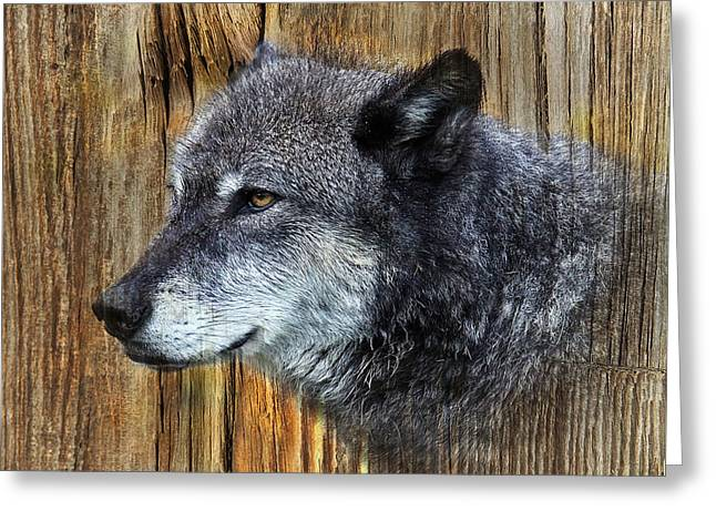 Preditor Greeting Cards - Grey Wolf on Wood Greeting Card by Steve McKinzie