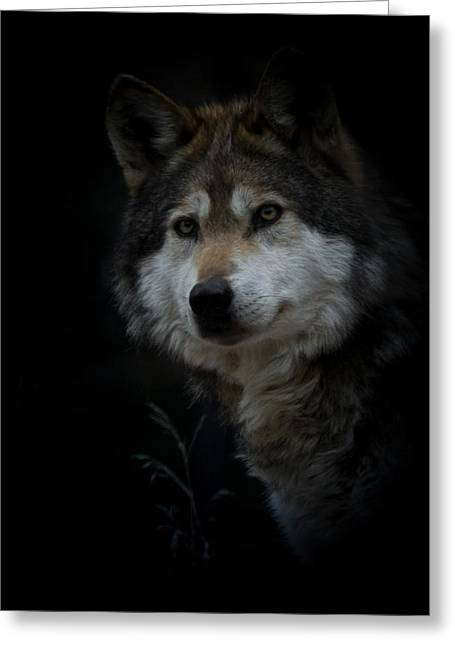 Dog Photographs Greeting Cards - Grey Wolf Portrait Greeting Card by Ernie Echols