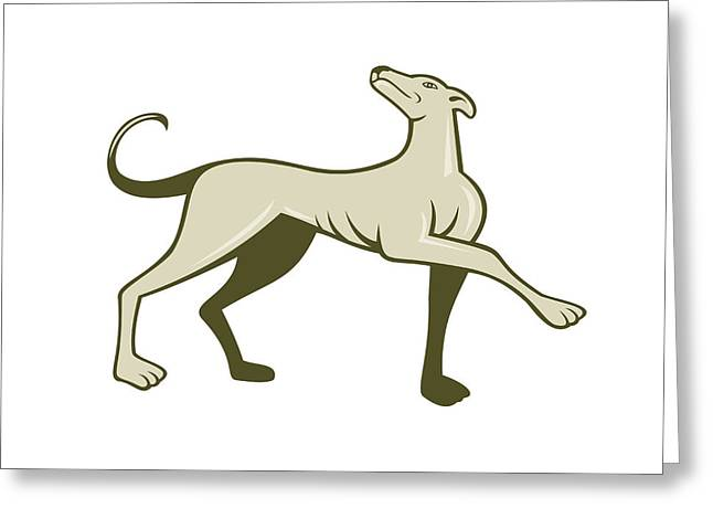 Greyhound Dog Greeting Cards - Greyhound Dog Marching Looking Up Cartoon Greeting Card by Aloysius Patrimonio