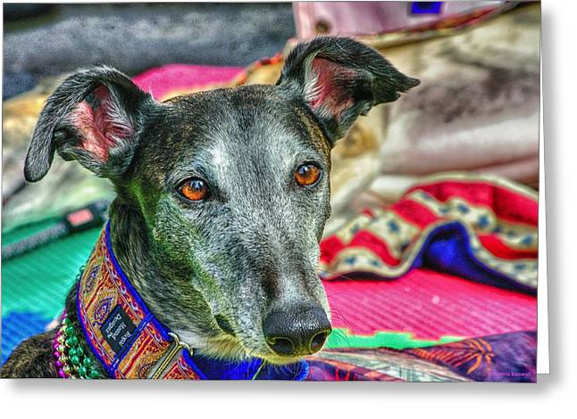 Rescued Greyhound Greeting Cards - Greyhound Rescue  Greeting Card by Dennis  Baswell