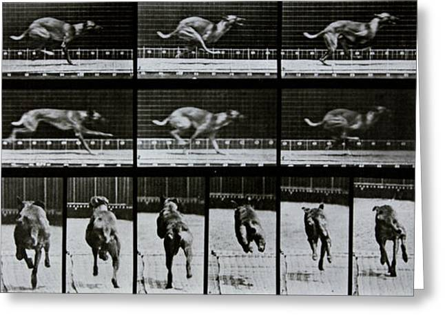 Dog Photo Greeting Cards - Greyhound running Greeting Card by Eadweard Muybridge