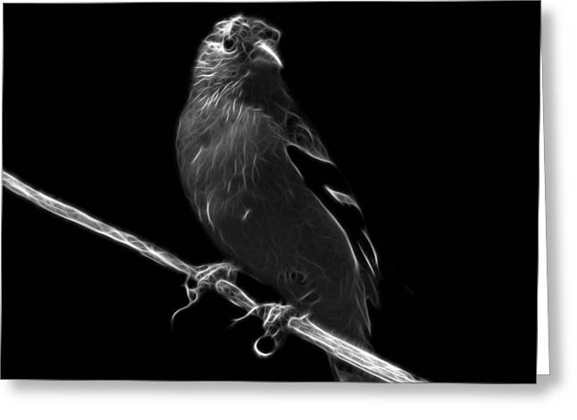 Goldfinch Digital Art Greeting Cards - Greyscale Lesser Goldfinch - 2235 F Greeting Card by James Ahn