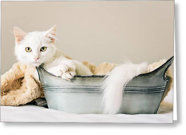 Shelter Kitty Greeting Cards - Griffin - Animal Rescue Portraits Greeting Card by Andrea Borden