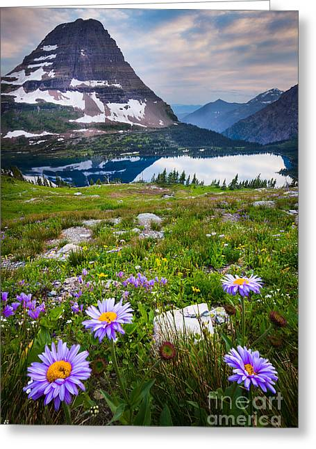Aster Greeting Cards - Hidden Lake Flowers Greeting Card by Inge Johnsson