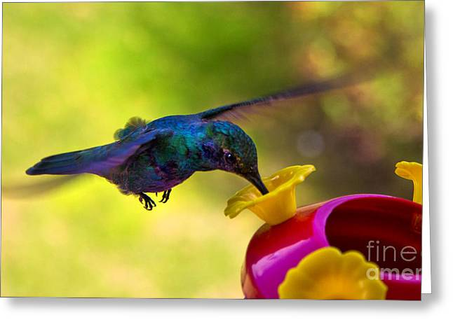 Hovering Greeting Cards - Gripping The Air Greeting Card by Al Bourassa