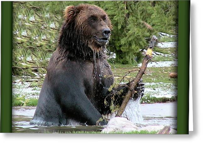 Grizzly Bear 07 Greeting Card by Thomas Woolworth