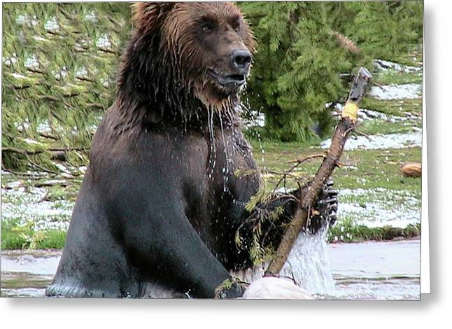 Alaska Greeting Cards Greeting Cards - Grizzly Bear 6 Greeting Card by Thomas Woolworth