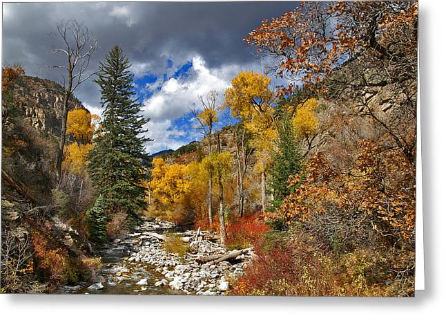 Jeremy Greeting Cards - Grizzly Creek Cottonwoods Greeting Card by Jeremy Rhoades