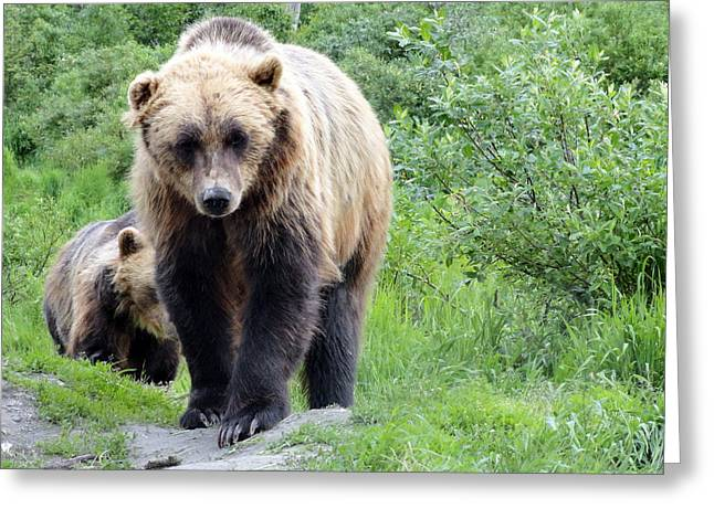 Dani Jennings Art Greeting Cards - Grizzly Eye to Eye Greeting Card by Danise Abbott