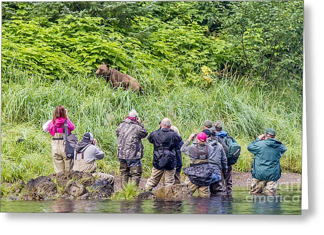 Affinity Greeting Cards - Grizzly poses for tourists Greeting Card by Darcy Michaelchuk