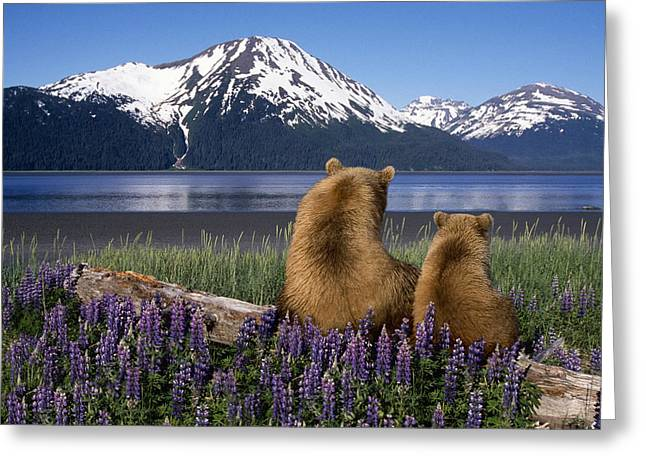 Bonding Greeting Cards - Grizzly Sow & Cub Sit On Log & View Greeting Card by Composite Image