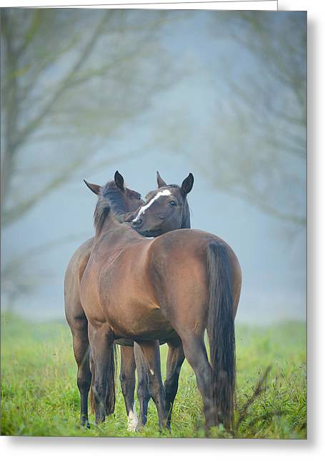 Twosome Greeting Cards - Grooming horses Greeting Card by Andy-Kim Moeller