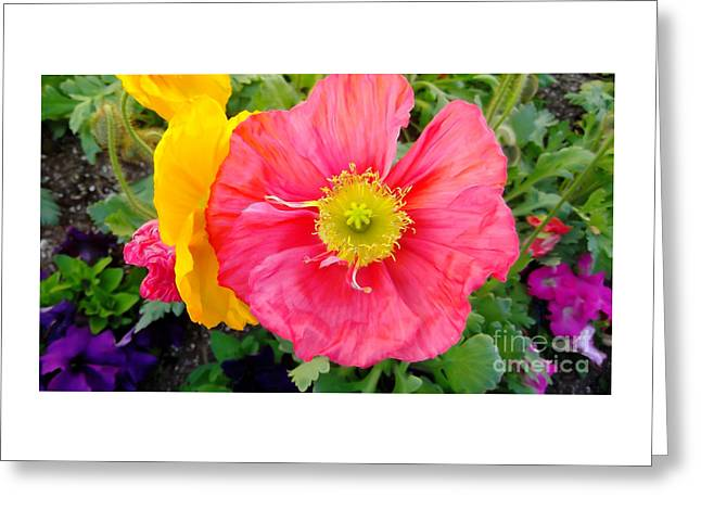 Recently Sold -  - Fineartamerica Greeting Cards - Grossmont Flower Greeting Card by Alan Thwaites