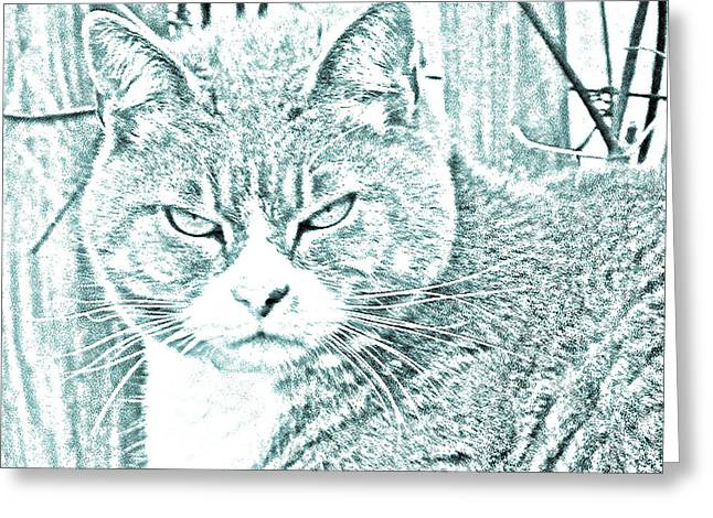 G. Pawer Greeting Cards - Grouchy Kitty Greeting Card by J D Owen